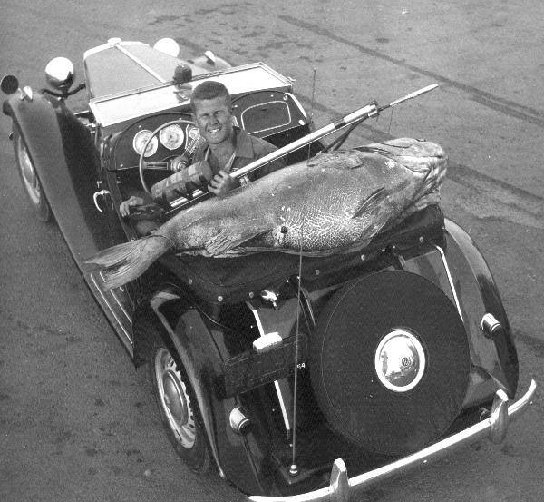 Ron Merker circa 1953 with spearfishing world record